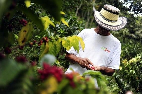 Columbia Coffee Farmer