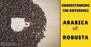 TCB-Feature-Arabica-Vs-Robusta-Coffee-Bean